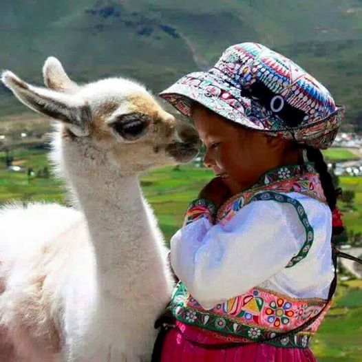 Peru kid and llama